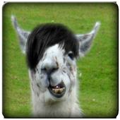 Llama Sound Clips icon