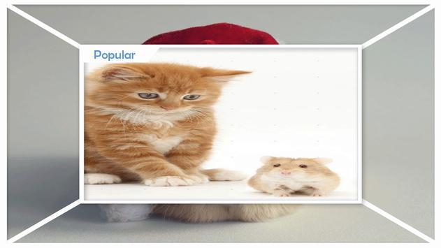 Hamster Wallpapers apk screenshot
