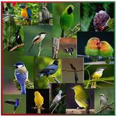 Koleksi Master Kicau Burung icon