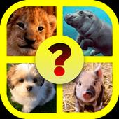 Baby Animal Quiz icon