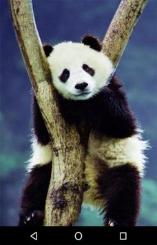 Baby Panda Wallpaper Apk Screenshot