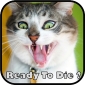 Crazy funny jokes and quotes icon