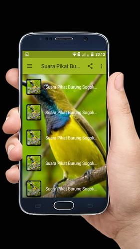 Suara Pikat Burung Sogok Ontong Offline Apk 2 4 Download For Android Download Suara Pikat Burung Sogok Ontong Offline Apk Latest Version Apkfab Com