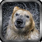 Bear Live Wallpaper icon