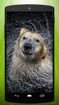 Bear Live Wallpaper poster