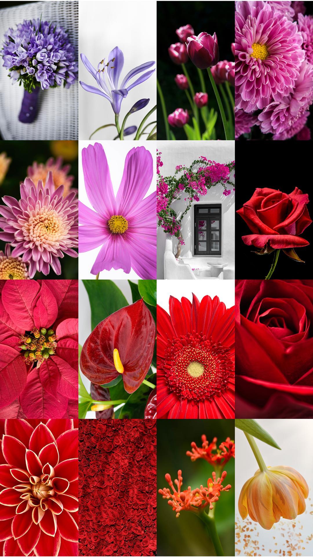 Download 2000+ Wallpaper Bunga Yg Indah  Paling Keren