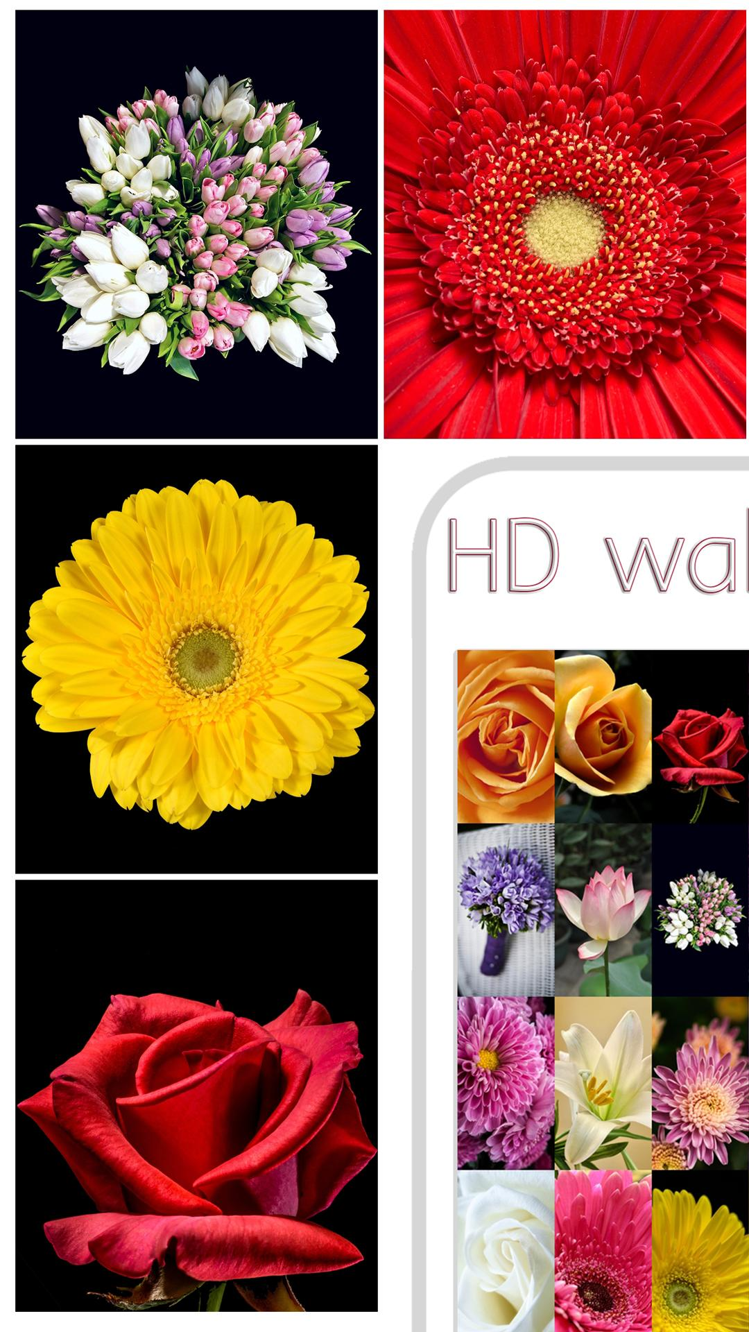 Download 1060+ Wallpaper Wa Indah Gratis Terbaik