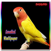 Lovebird Wallpaper icon