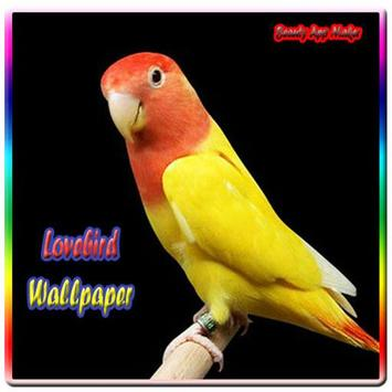Lovebird Wallpaper apk screenshot