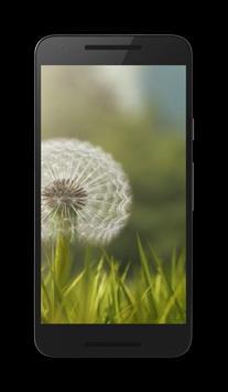 Dandelion Live Video Wallpaper screenshot 1