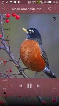 Kicau American Robin apk screenshot