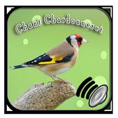 MP3 GRATUITEMENT TÉLÉCHARGER CHARDONNERET CHANT ALGERIEN