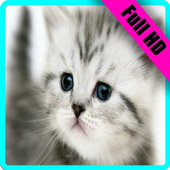 Cat Wallpaper Full HD 😸😻😽 icon