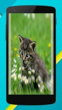 Cat Wallpaper Full HD 😸😻😽 poster