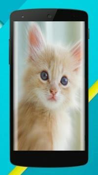 Cat Wallpaper Full HD 😸😻😽 apk screenshot