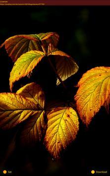 Leaves Wallpaper 🍂 apk screenshot