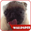 Dog Licker Live Wallpaper 2018 free icon