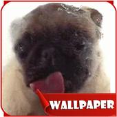 Dog Licker Live Wallpaper 2018 free icono