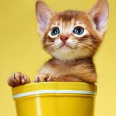 Cute Little Kitty wallpaper icon
