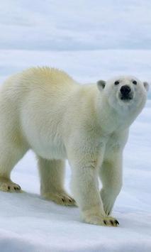 Polar Bears wallpaper screenshot 3