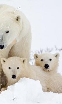 Polar Bears wallpaper poster
