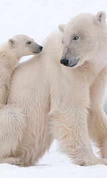 Polar Bears wallpaper screenshot 1