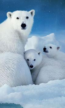 Polar Bears wallpaper screenshot 2