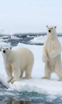 Polar Bears wallpaper screenshot 4