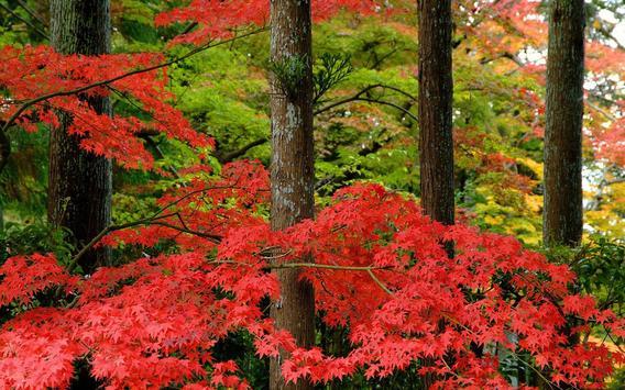 Maple Leaves Wallpaper poster