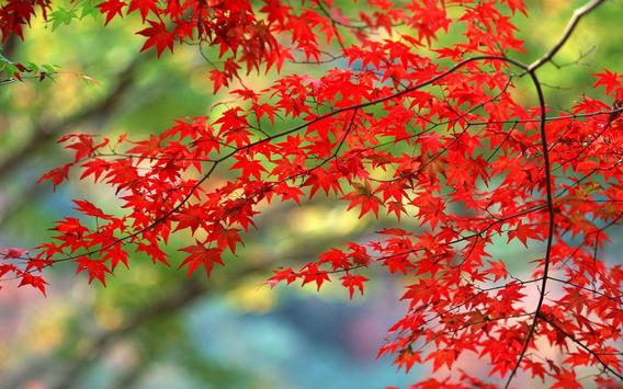 Maple Leaves Wallpaper apk screenshot
