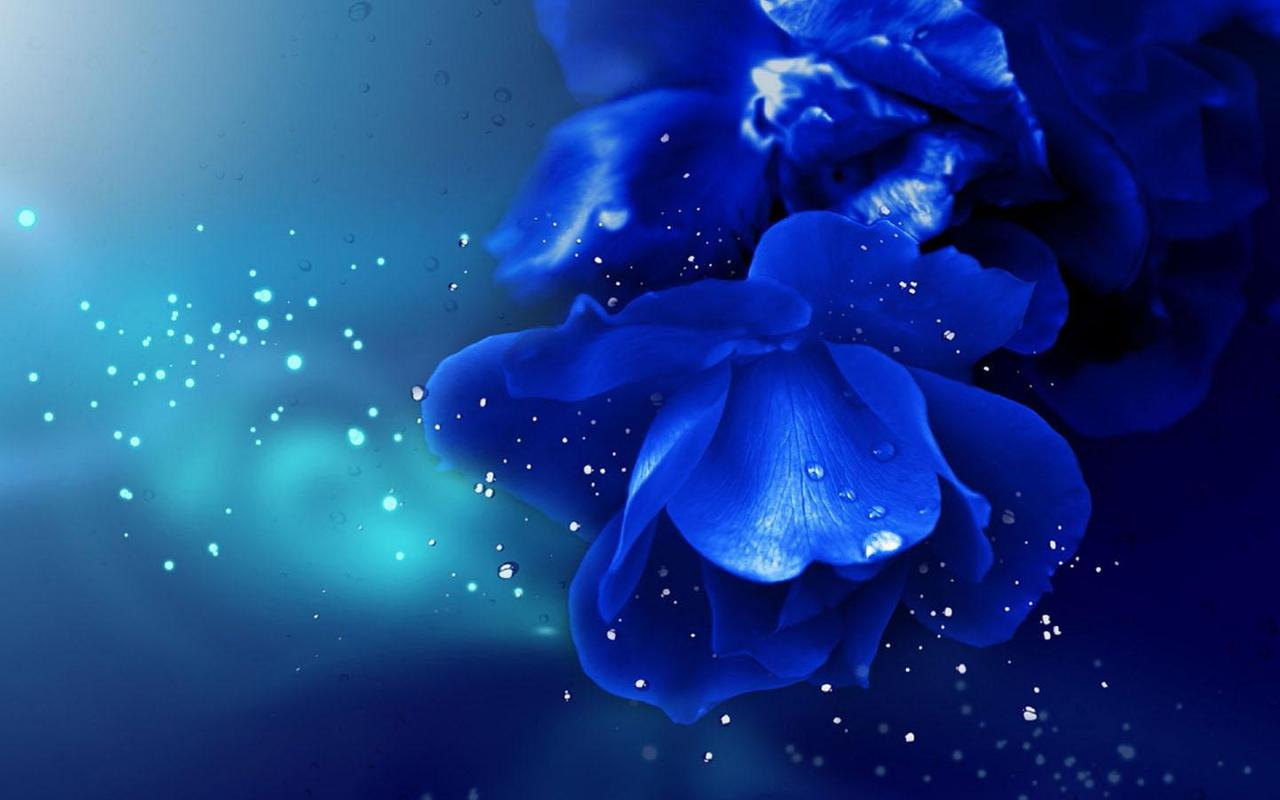 blue rose wallpaper apk download - free personalization app for