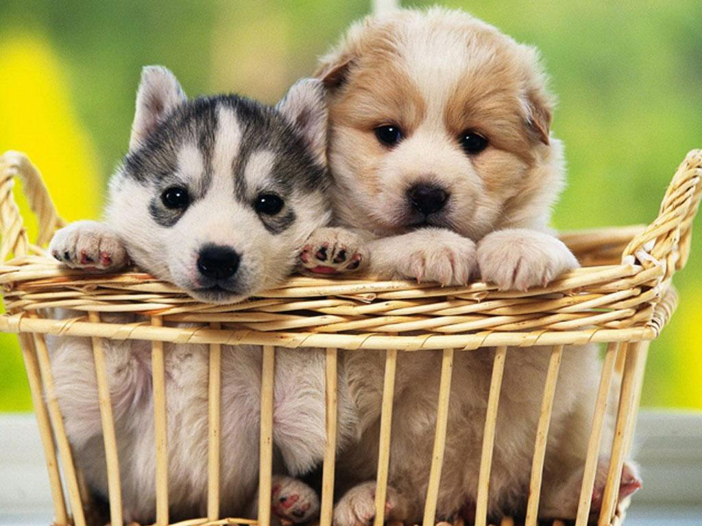 Free Puppy Dog Wallpaper For Android Apk Download