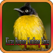 Kicau Burung Kutilang Emas icon