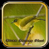 Tips Perawatan Burung Pleci icon