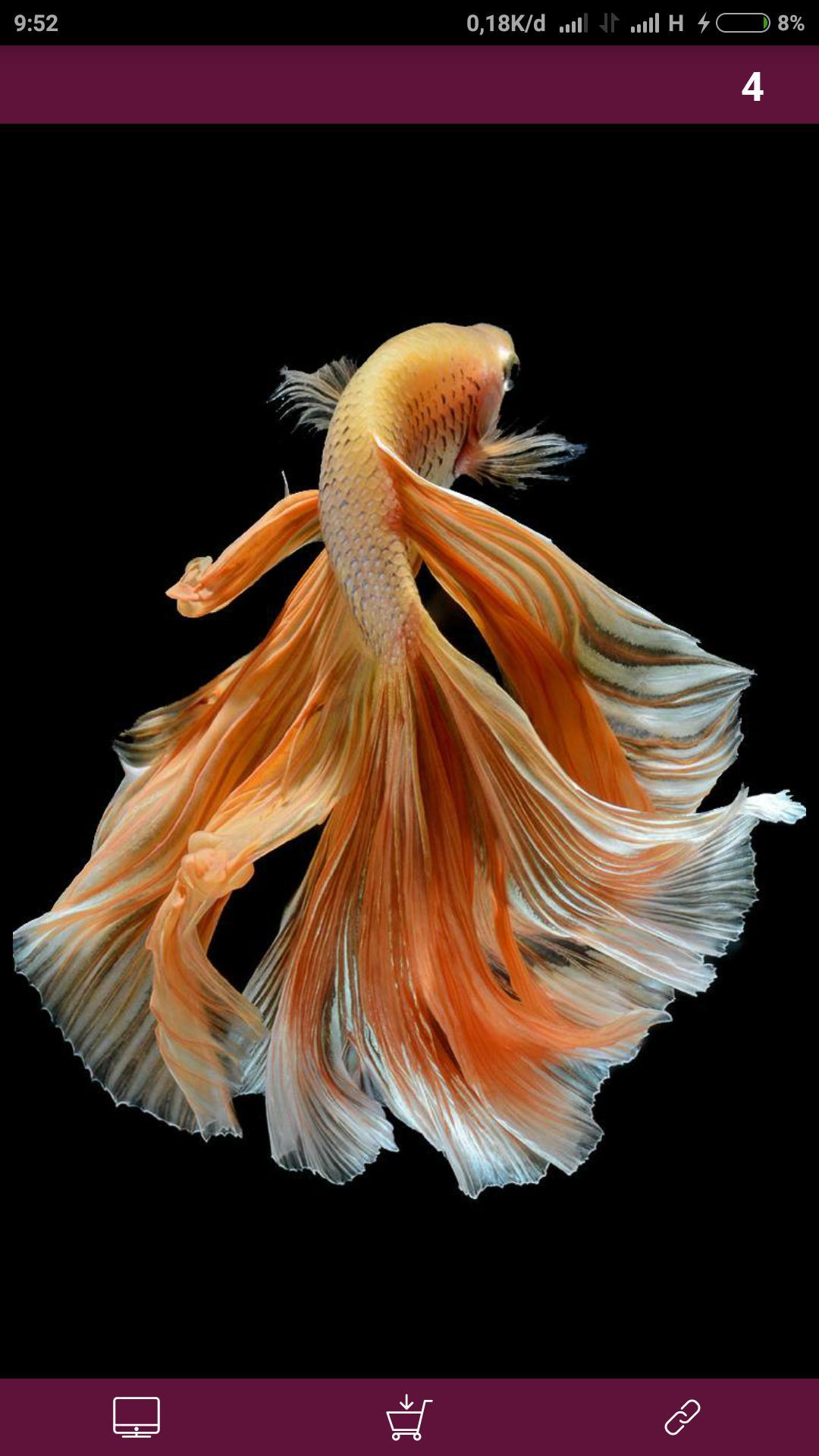 101+ Gambar Ikan Cupang Gif Gratis Terbaru