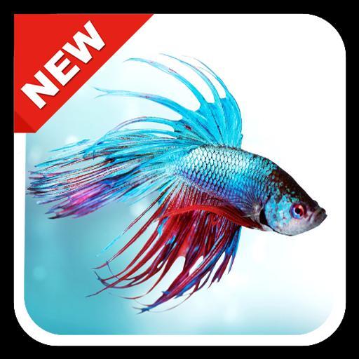 Unduh 9100 Koleksi Gambar Ikan Cupang Hd Terbaru