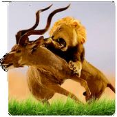 Wild Lion Simulator icon