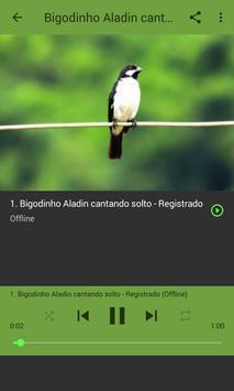 Canto Para Esquentar Bigodinho apk screenshot