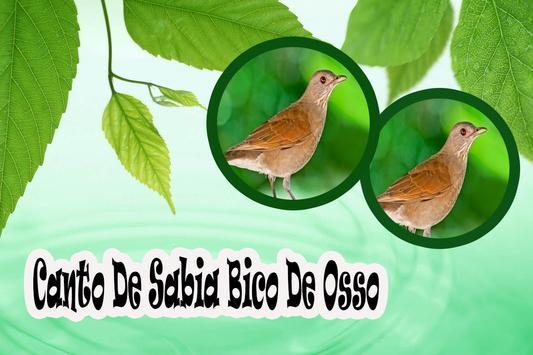Canto De Sabia Bico De Osso Mp3 apk screenshot