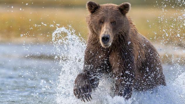Big Bear ONline camera poster