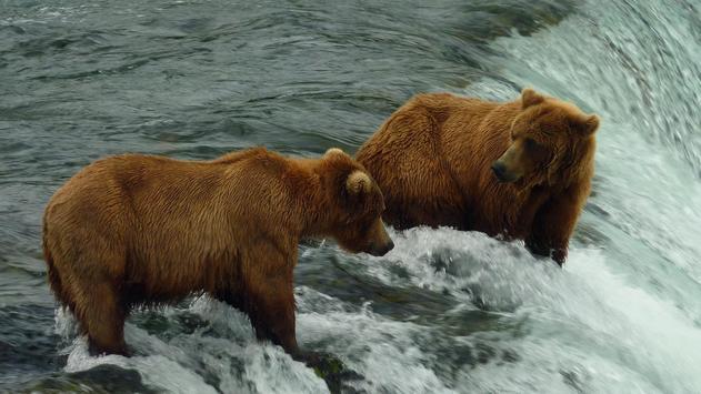 Big Bear ONline camera screenshot 1
