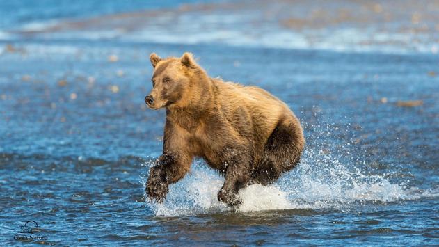 Big Bear ONline camera apk screenshot