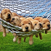 Cute Puppies Wallpapers icon