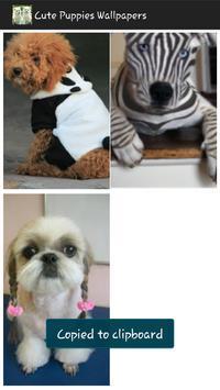 Cute Puppies Wallpapers apk screenshot