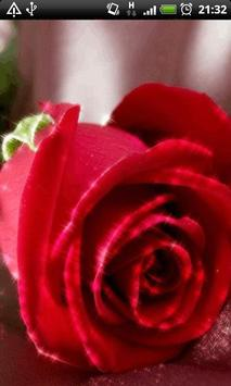 Big Red Rose Live Wallpaper poster