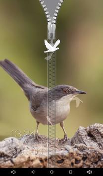Birds Zipper Lock Screen apk screenshot
