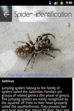 Spider in da house apk screenshot