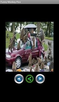 Funny pics monkeys poster