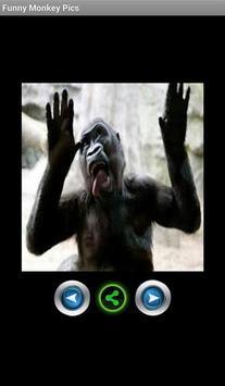 Funny pics monkeys screenshot 1