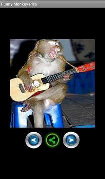 Funny pics monkeys screenshot 2